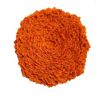 Sunburst Lichen
