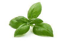 Basil fresh herbs fresh produce InvertiGro