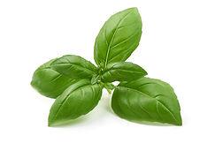 Basil fresh herbs InvertiGro