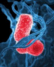 bacteria-811861_640.jpg