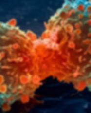 lung-cancer-cell-dividing-article.__v700