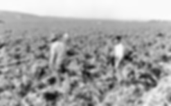 1322501877_filipino-farmworkers.png