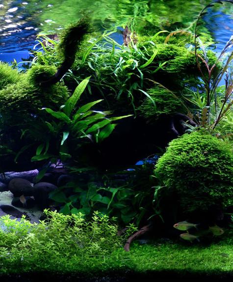 stage aquarium chambres d'hôte ardèche porte de besse