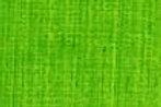 AS Artists' Oil Colours Australian Leaf Green Light