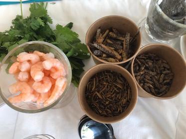 les insectes dans nos assiettes