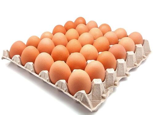 Eier 30 Stück