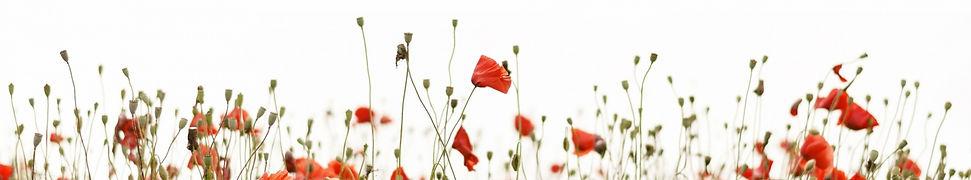 poppy-flowers-border_edited.jpg