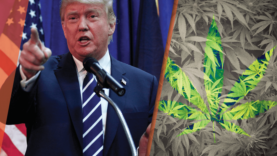 Political Issue Analysis: The Legalization of Marijuana