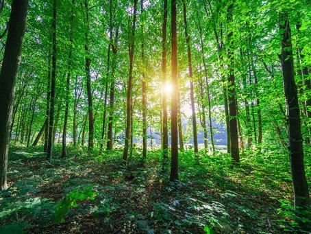 Primórdios do Movimento Ecológico