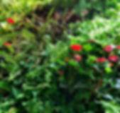 Aménagement végétal Pau