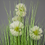 Thumbnail: A Pot of Artificial Dandelions