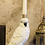 Thumbnail: Parrot Candle Holder