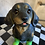 Thumbnail: Dachshund in Green Boots
