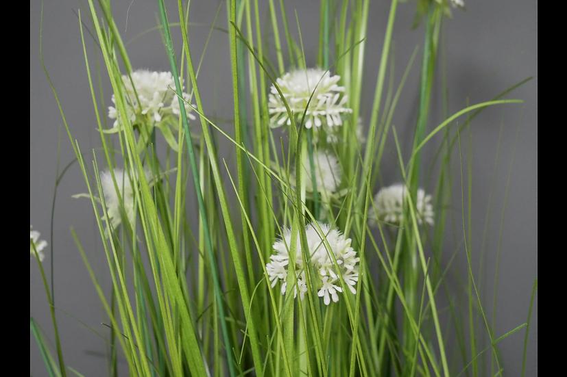 A Pot of White Allium