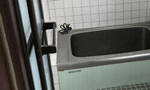 浴室周りからの羽アリ