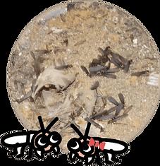 羽アリが大量に発生している様子