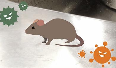 ネズミによる食害