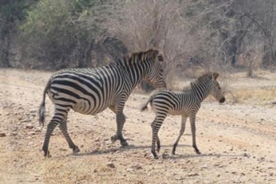 Sept.21 – Wildlife to Village Life