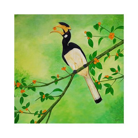 Hornbill a.jpg