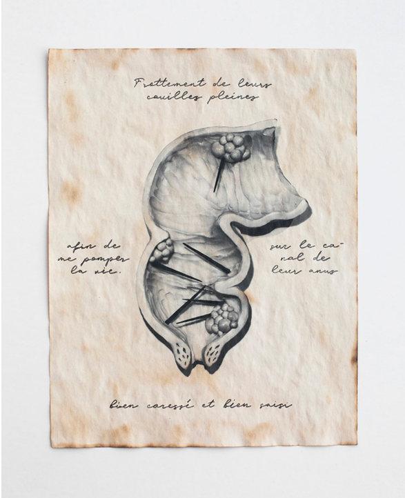 'L'intestin'