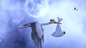 Saint Peter's – Storks