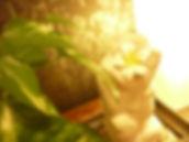 TenpRich(テンプリッチ)脱毛・エステのサロン店内画像