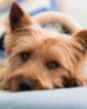 Pet Photography Poquoson Virginia