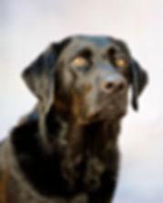 Pet Photography Yorktown Virginia