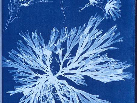 When art and science meet, amazing prints happen