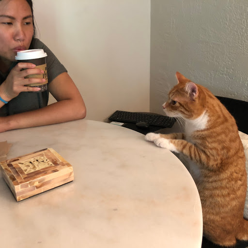 Ann is drinking coffee and staring at reddish orange cat that is leaning on round table. Cat has front two paws on table and staring at Ann. at Ann.