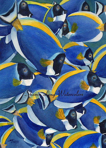 """Going Against the Flow"" Print 16x20 Blue Tangs Tropical Fish"