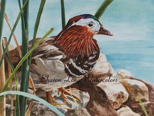"""Cool In the Shade"" Mandarin Duck Original Watercolor Painting"