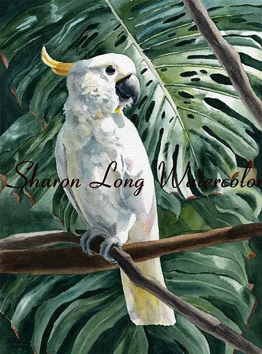 """Royal Cockatoo"" Matted Print 20x16 Tropical Bird"
