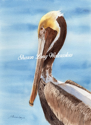 "Original Watercolor Painting of a Pelican ""Oscar"""