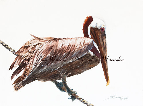 """Tight Rope Walker"" Print of Brown Pelican"