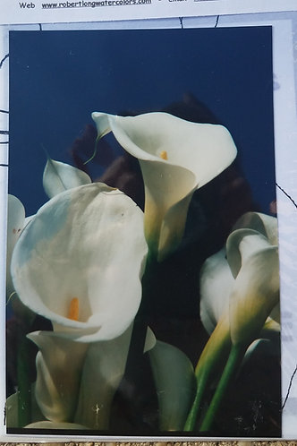 White Calla Lilly Flowers Painting Transfer Kit