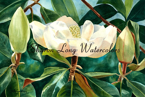 """Budding Out"" Framed Original Watercolor of Magnolia Bloom"