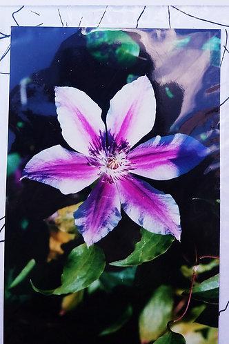 Purple Flower Painting Kit