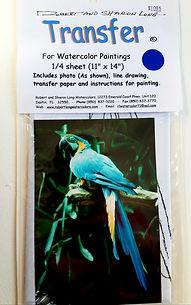 McCaw Parrot #34