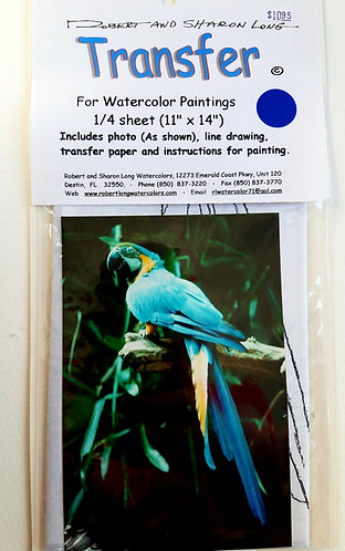 Blue Macaw Parrot Painting Instructions Kit