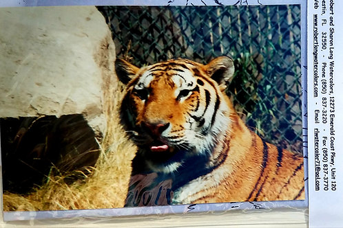 Tiger Painting Kit