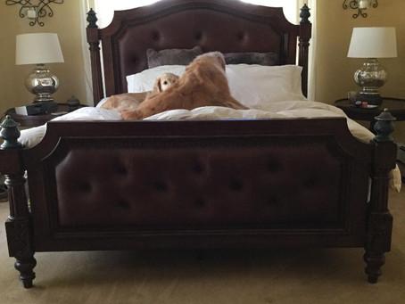 Master Bedroom Do-over