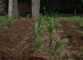 Ph почвы на вашем участке