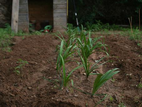 Step by step organic soil preparation method