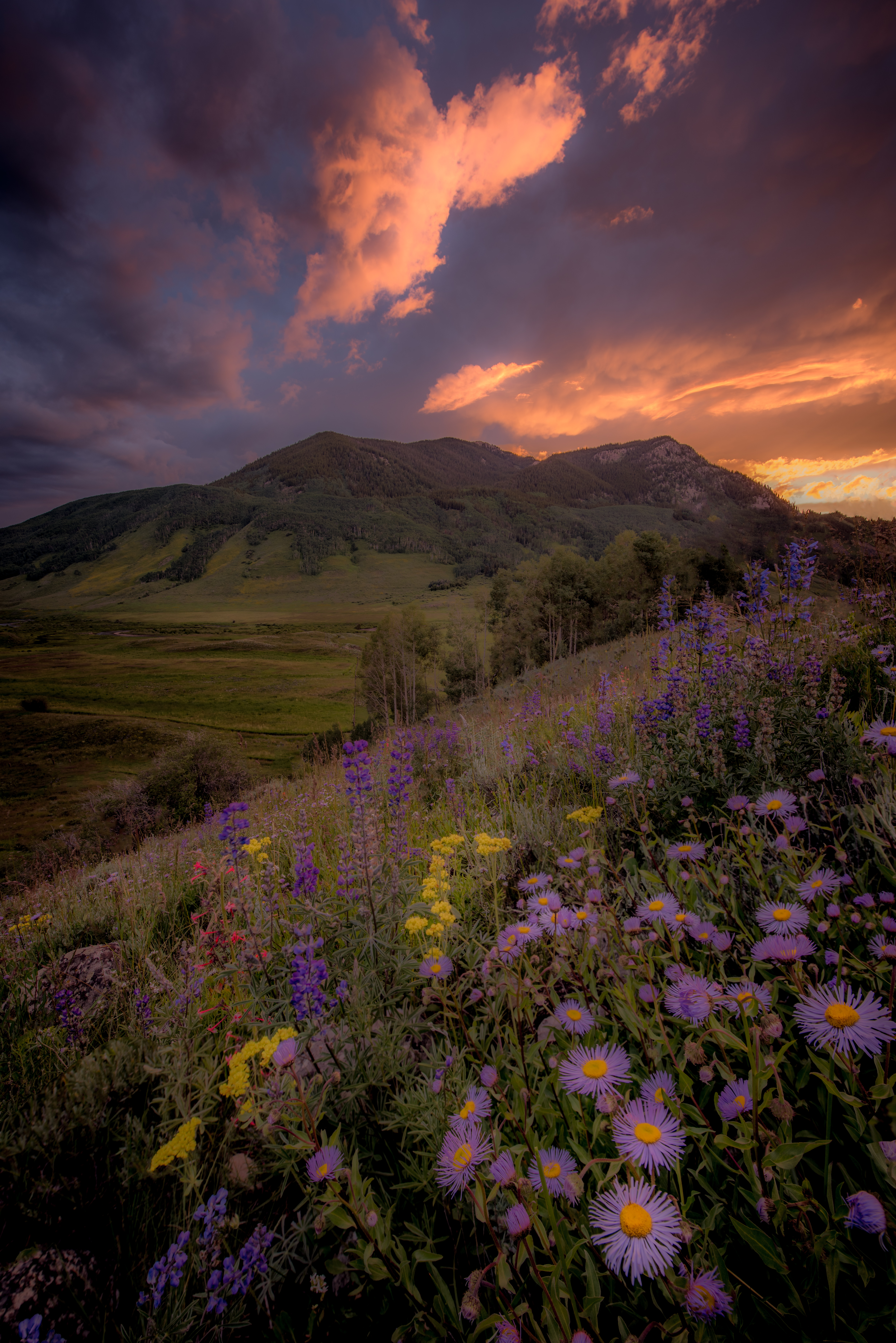 Colorado Wildflowers Photography Worksho