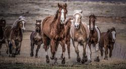 Colorado Horse Ranches Photography Workshop_14