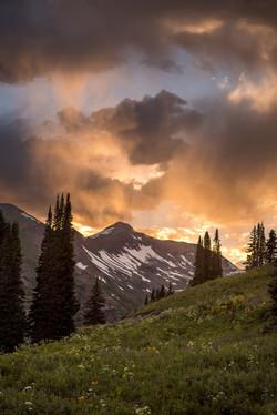 Colorado Wildflowers Photography Workshop_13