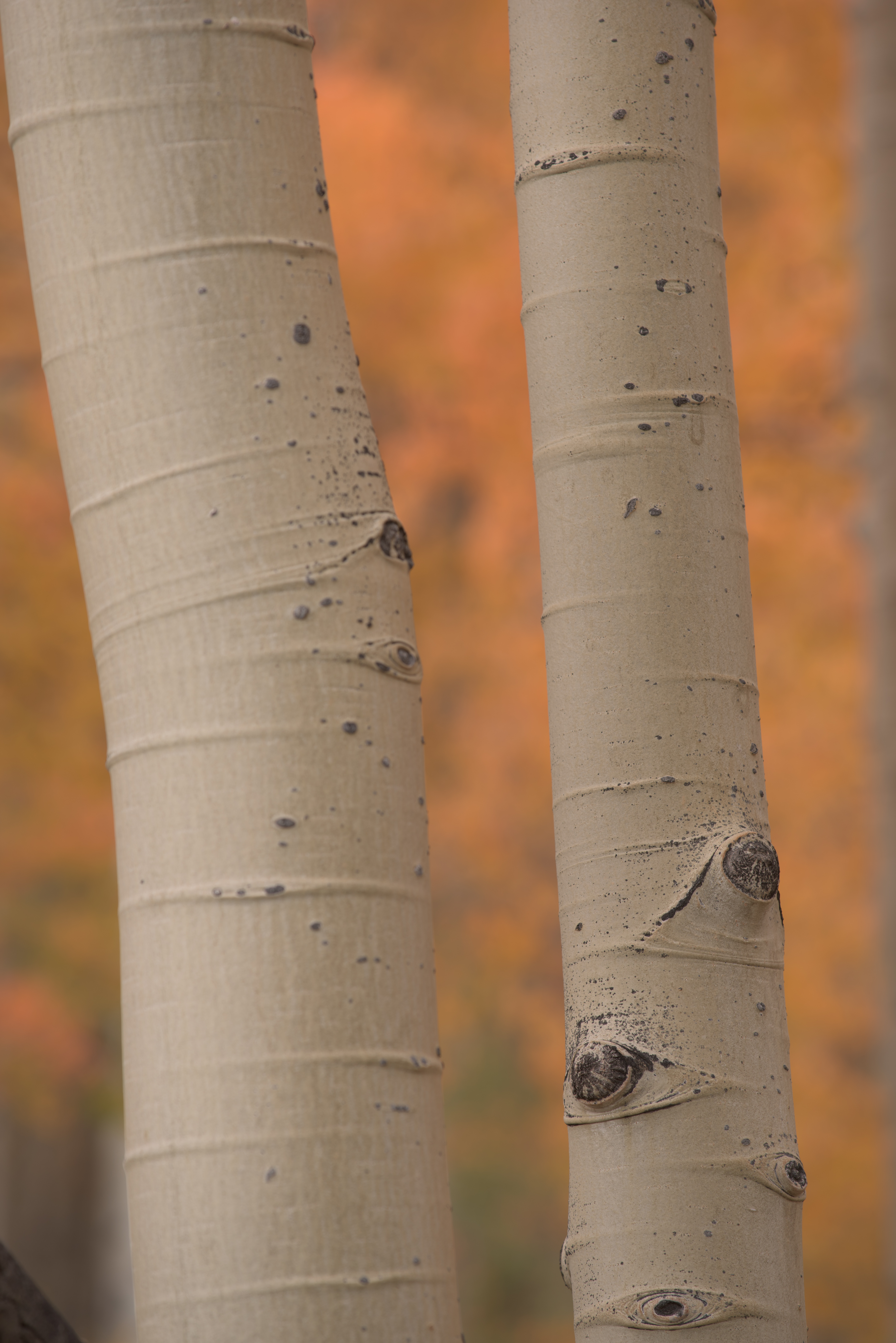 Colorado Fall Color Photography Workshops_6