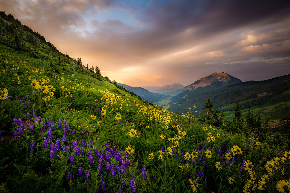 wildflowers photography in crested butte colorado
