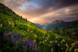 Colorado Wildflowers Photography Workshop_1